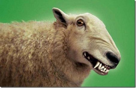 Ulv i fåreklær1