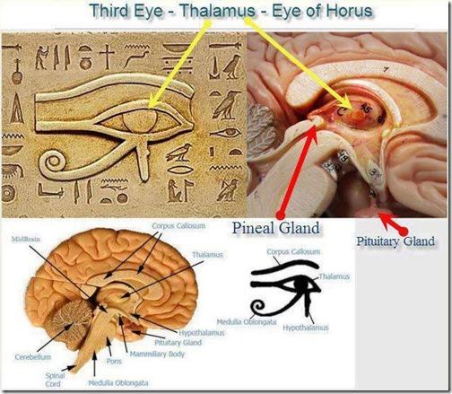 Horus øye