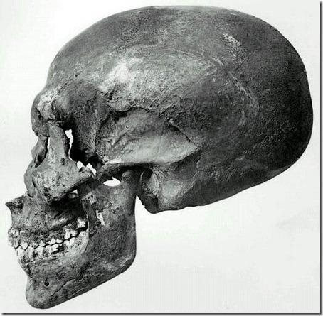 Akenatens skalle