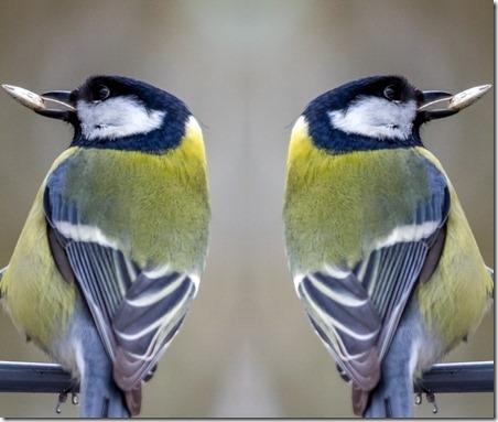 Speilbilde 2