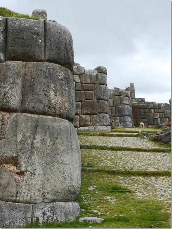 Cusco-murene