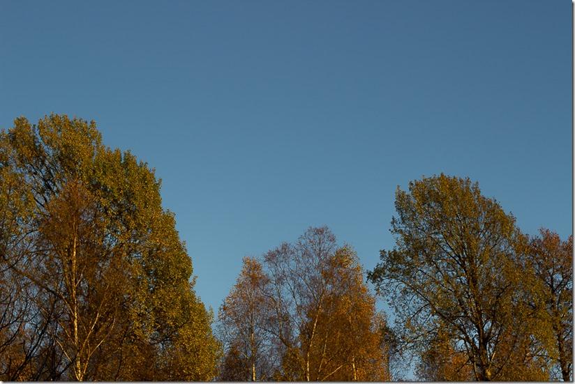Osp og blå himmel (1 of 1)