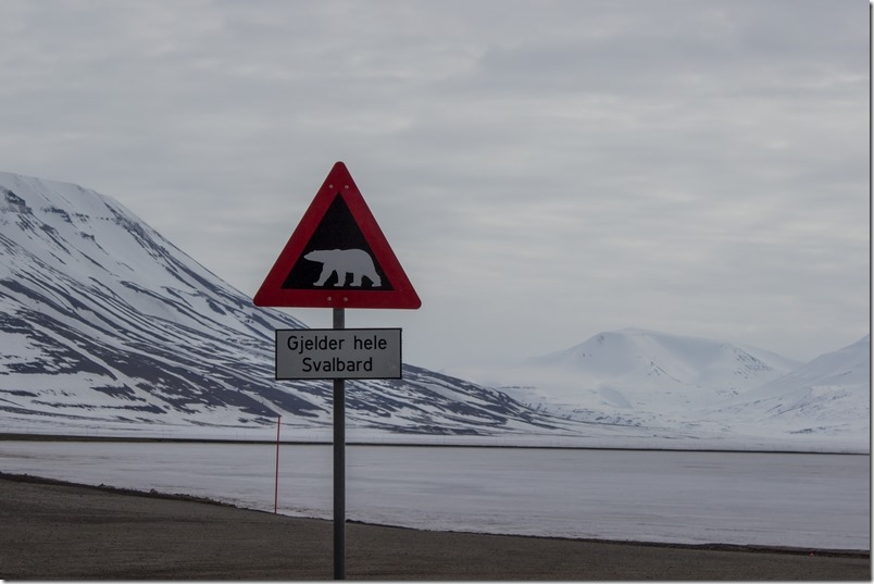Isbjørnskilt (1 of 1)
